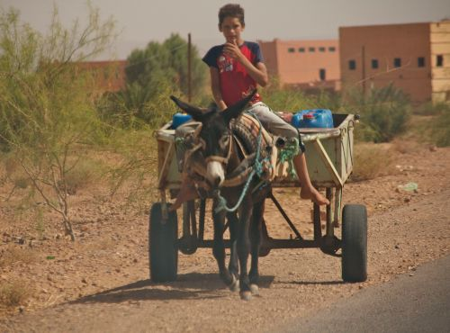 boy-and-mule-cart