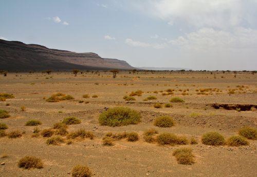 sahara desert scrubby