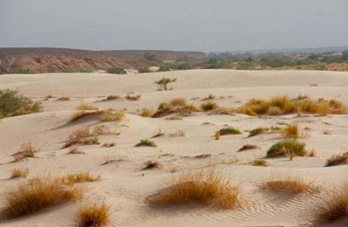 sahara-sand-grass